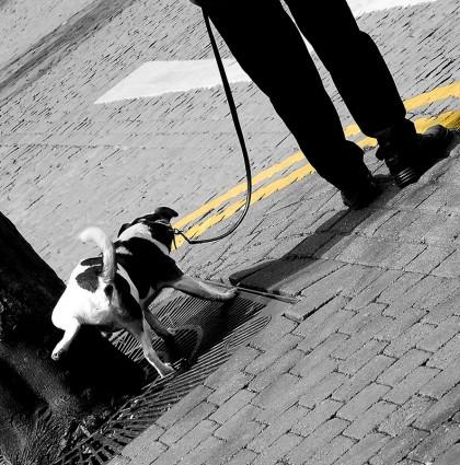 La technique du chien qui fait pipi partout